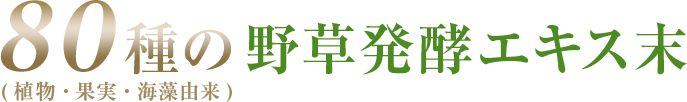 80種の野草発酵エキス末